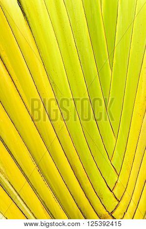 Closeup Of The Interwoven Stalks Of A Ravenala Palm