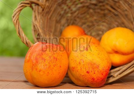 Nectarines Spilled From An Overturned Basket