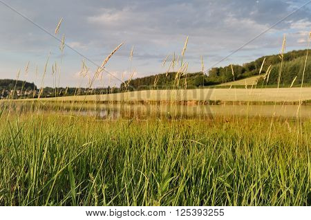 grass in front of lake in Morvan - France