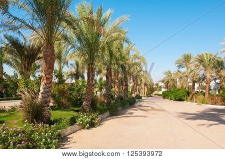 Palm Trees Line A Tropical Boulevard