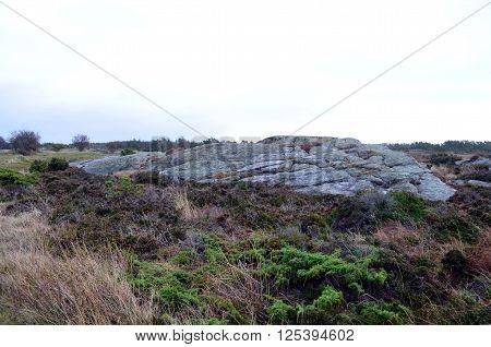 rough landscape in sweden at the ocean in autumn