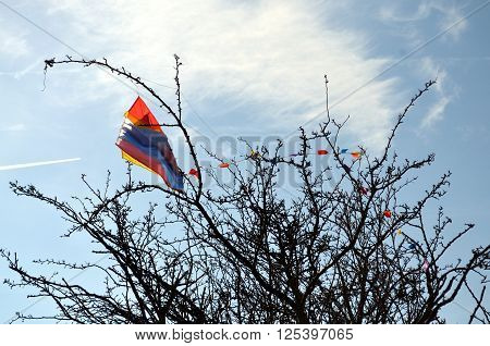 kite trapped in a tree in springtime. blue sky