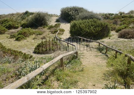 Sand dune at the in the beach of Marbella Andalusia Spain