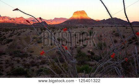 Desert landscape at sunset in Big Bend National Park in Texas