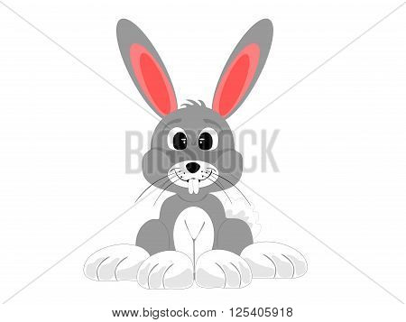 cute grey white rabbit sitting, vector, png format,