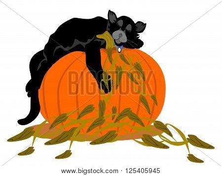 black cat asleep orange pumpkin, vector, png format
