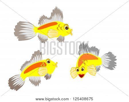 skunk clown tropical fish, vector, png format,