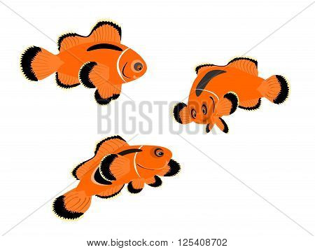 red saddle-back clown fish, vector, png format, tropical