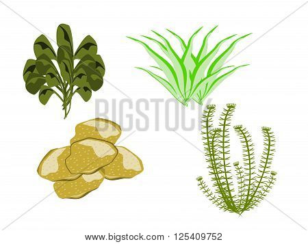 ocean underwater plants, various, png format, vector