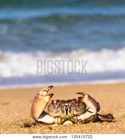 Seafood Posing On the Shore