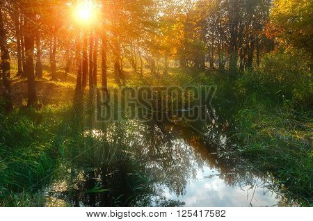 Autumn yellowed trees near the pond at sunset - soft focus processing