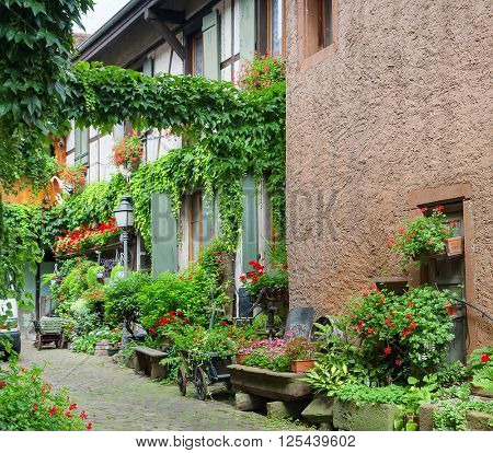 Exterior of old house with flowers and plants in Colmar. Alsace. France.