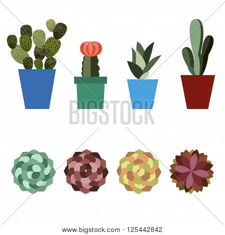 Cactus and succulents plants set. Flat design Vector illustration of blooming succulents and cactus in pots. Exotic flowers. Top view Isolated cacti