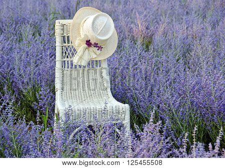 Hat on white wicker chair in a field of Russian Sage.