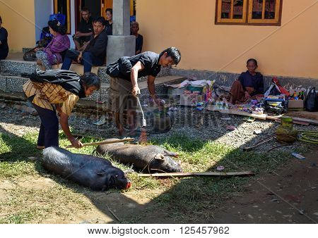 Burning Skin Slaughtered Pig In Funeral Ceremony In Tana Toraja