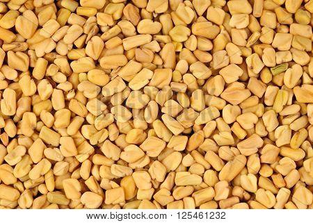 Fenugreek seeds macro as food nature background