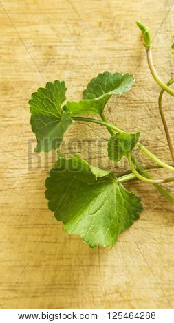 Centella asiatica  leaves on old wood background