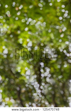 Natural Blow Sparkling Bokeh Of Tree Soft Abstract Green Background