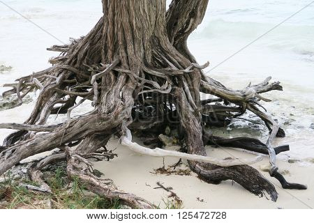 Dry trunk on a sandy beach for concepts.