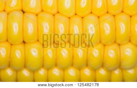Corn macro large grains as background texture