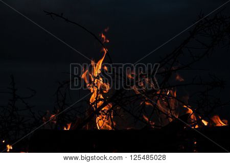 Campfire At Twilight On Beach