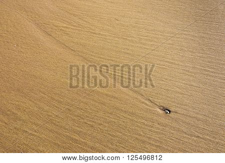 Sandy beach pattern with single shell forming focal point