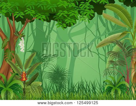 Vector illustration of forest background in the night