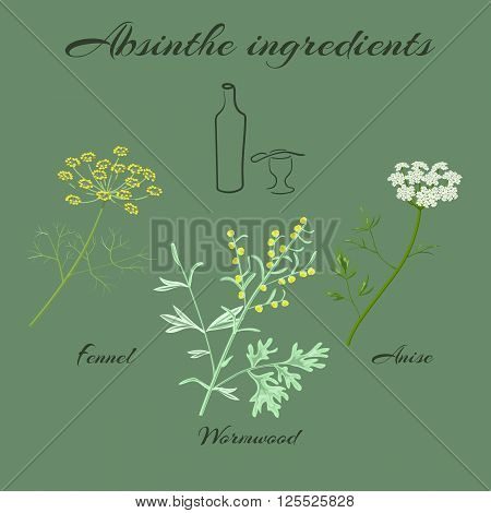 Absinthe ingredients. Grand wormwood (Artemisia absinthium) , green anise (Pimpinella anisum), sweet fennel (Foeniculum vulgare). Vector illustration.