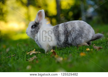 Cute Rabbit On Green Grass