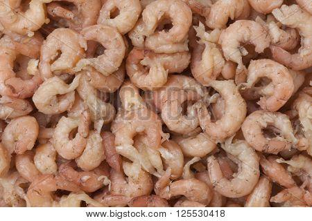 Peeled brown shrimps full frame