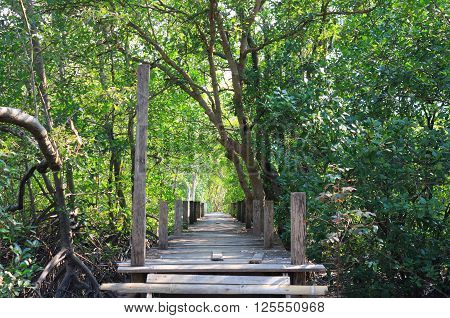boardwalk wooden path over river surrounded mangrove forest
