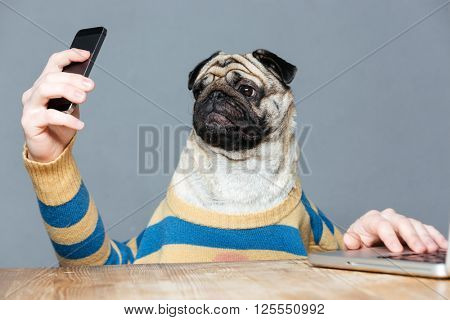 Amusing pug dog with man hands in striped sweater using smartphone over grey background