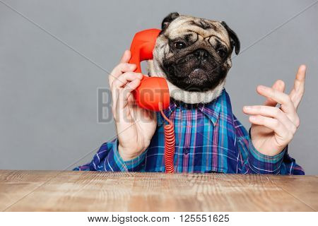Serious man with pug dog head in checkered shirt talking on telephone over grey background