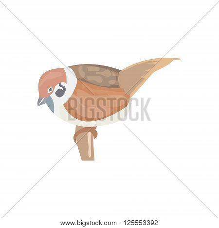 Sparrow town Sparrow bird vector illustration Sparrow lives near people