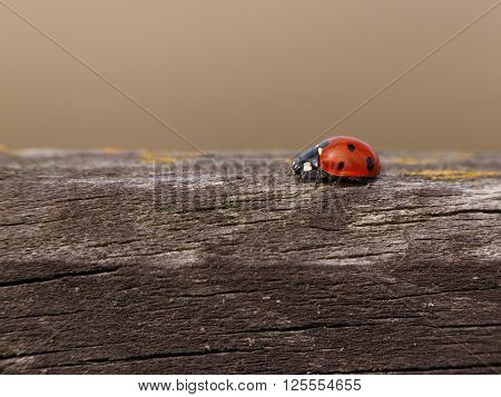 close up of ladybug on wooden fence