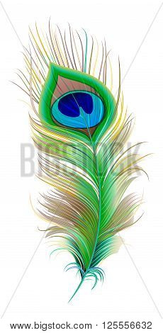Peacock feather. Beautiful bird feather. Isolated on white vector illustration