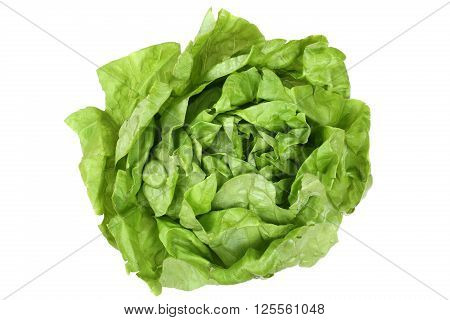 Head Cabbage Lettuce Vegetable Top View Isolated