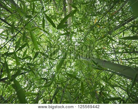 Bamboo Tree Perspective