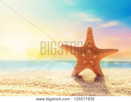 Starfish on the sandy beach at ocean background