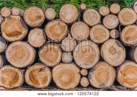 Timber Lumber Industry. Fresh Wood Logs Awaiting Transportation in the Forest. Production of Forest Wood Products. Timberland.