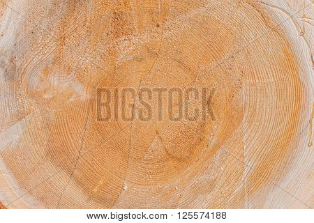 Tree Log Cross Section. Cross Section of a Tree Trunk Background Photo.