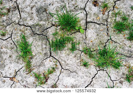 Texture Of Grey Withered Earth With Cracks And Green Grass Hdr Effect