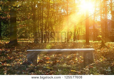 Autumn rural landscape with wooden bench under bright sunlight in autumnal forest. Soft focus processing