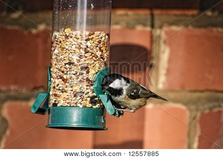 Coal Tit On Feeder