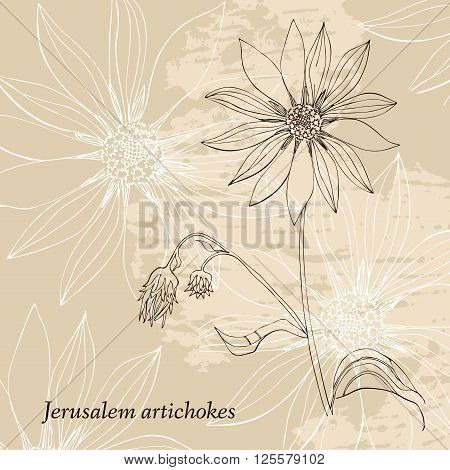 Hand drawn Jerusalem artichokes flower. Elegant vintage card. Vector illustration.