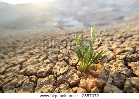 Green Grass In Desert