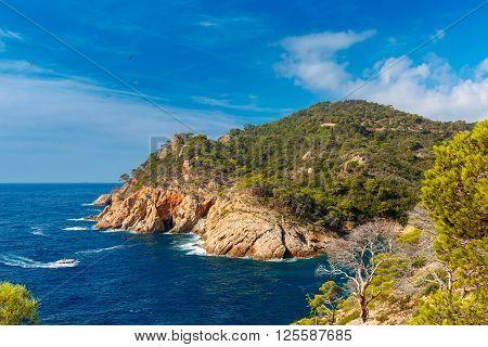 Aerial view of Cala Pola bay near Tossa de Mar, coast of the Balearic Sea in the summer morning, Costa Brava, Catalunya, Spain