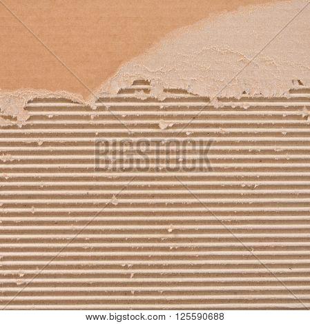 Torn corrugated cardboard backdrop. Square format background.