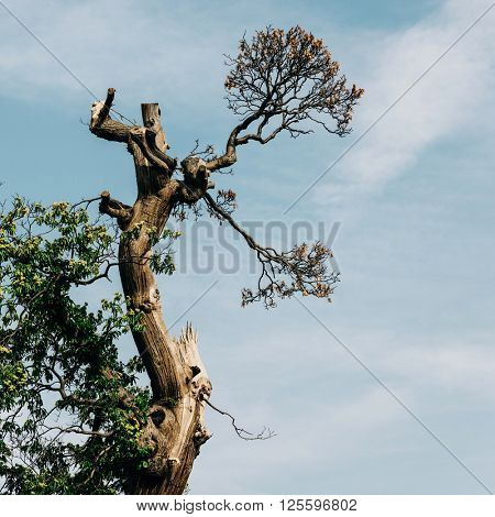 Old tree detail and sky background