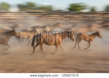 Herd of horses in the movement blurred driven into a the corral. Spain El Rocio.